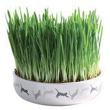 Trixie Céramique écuelle herbe à chats _