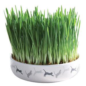 Trixie Céramique écuelle herbe à chats